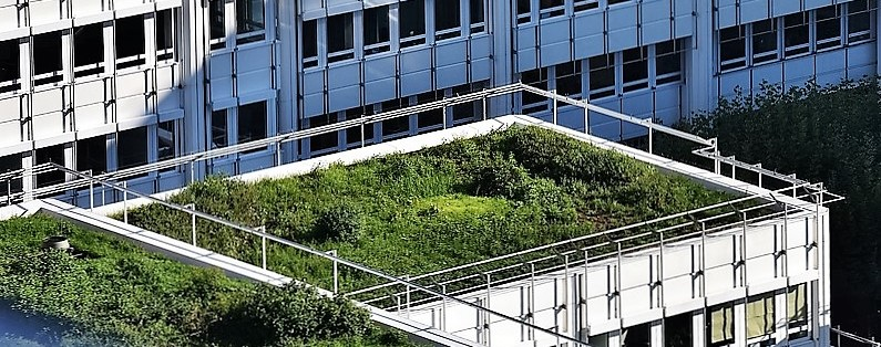 Green roofs provide sustainable drainage